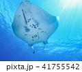 マンタ エイ 海中の写真 41755542