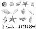 水彩画 ひとで ヒトデのイラスト 41756990