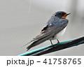 電線 雨 鳥の写真 41758765