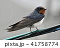 雨 電線 鳥の写真 41758774