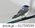 電線 雨 鳥の写真 41759599