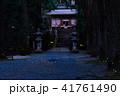 ヒメボタル 乱舞 光の写真 41761490