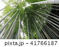 鎌倉明月院のあじさいと竹林 41766187