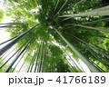 鎌倉明月院のあじさいと竹林 41766189