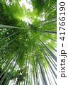 鎌倉明月院のあじさいと竹林 41766190