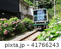 鎌倉江ノ電とあじさい 41766243