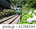 鎌倉江ノ電とあじさい 41766244