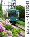 鎌倉江ノ電とあじさい 41766245