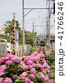 鎌倉江ノ電とあじさい 41766246