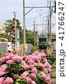 鎌倉江ノ電とあじさい 41766247