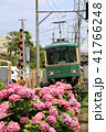 鎌倉江ノ電とあじさい 41766248