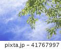 新緑 晴れ 空の写真 41767997