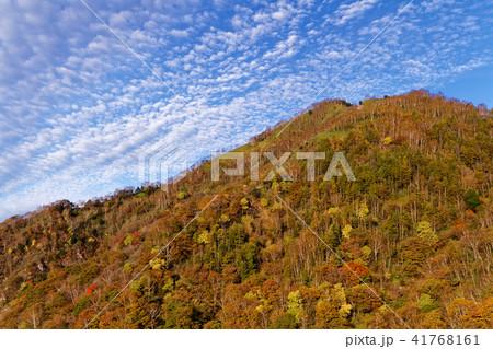 阿世潟峠から見る紅葉の社山稜線 41768161