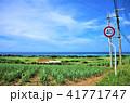 石垣島 晴れ 自然の写真 41771747