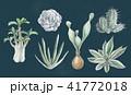 多肉植物イラスト 一覧 41772018