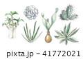 多肉植物イラスト 一覧 41772021