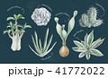多肉植物イラスト 一覧 41772022