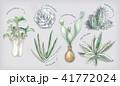 多肉植物イラスト 一覧 41772024