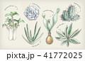 多肉植物イラスト 一覧 41772025