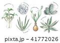 多肉植物イラスト 一覧 41772026
