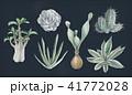 多肉植物イラスト 一覧 41772028