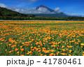 富士山 ポピー 花の都公園の写真 41780461
