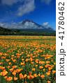 富士山 ポピー 花の都公園の写真 41780462