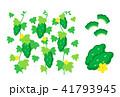 ゴーヤ 緑のカーテン グリーンカーテンのイラスト 41793945