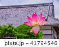 蓮 花 成福寺の写真 41794546