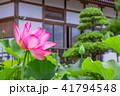 蓮 花 成福寺の写真 41794548