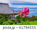 蓮 花 成福寺の写真 41794555