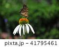 蝶 花 昆虫の写真 41795461