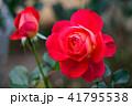 バラ 花 薔薇の写真 41795538