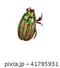 赤色のしま入が入ったコガネ虫 41795931