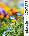 ネモフィラ 花 瑠璃唐草の写真 41797878