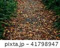 落ち葉の道 41798947