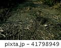 枯れ草の泥道 41798949