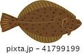 カレイ 鰈 魚のイラスト 41799199