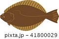 ヒラメ 平目 鮃のイラスト 41800029