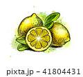 くだもの フルーツ 実のイラスト 41804431