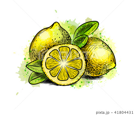 Lemon with leaves from a splash of watercolor 41804431