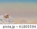 ピンク色のヤドカリ 41805594