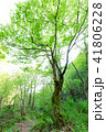 木 樹木 森林の写真 41806228