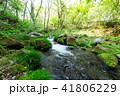 川 森林 自然の写真 41806229