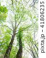 木 樹木 森林の写真 41806235