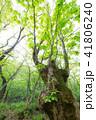 木 樹木 森林の写真 41806240