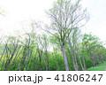 木 樹木 森林の写真 41806247