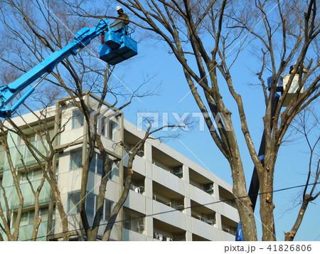 多摩平の森植樹管理 41826806