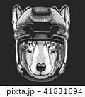 動物 ワイルド 野生のイラスト 41831694