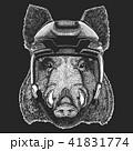 動物 野生 野生化のイラスト 41831774
